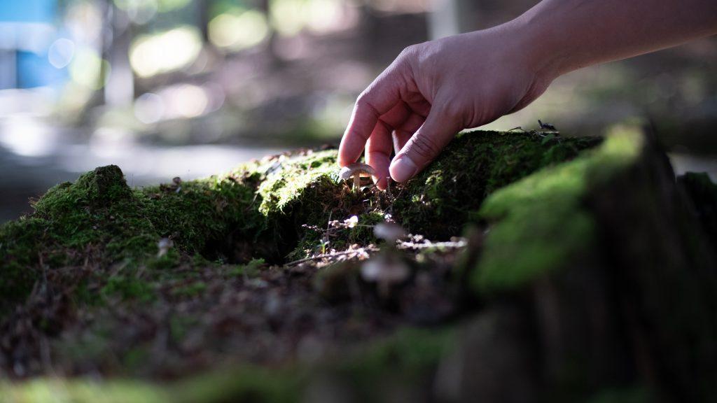 a hand picking wild mushrooms off a sun dappled mossy log