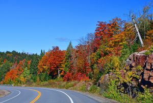Algonquin park in early fall showing all the warm colours of the trees along a roadway